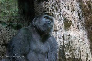 Conlin Photography Wildlife 1