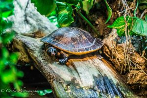 Conlin Photography Wildlife 6