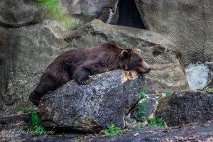 Conlin Photography Wildlife 5