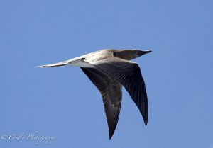 Conlin Photography Wildlife 10
