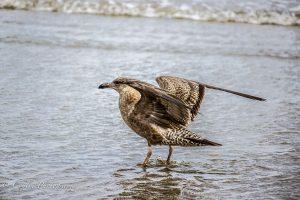 Conlin Photography Wildlife 15