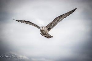 Conlin Photography Wildlife 3