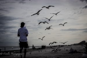Conlin Photography Wildlife 18