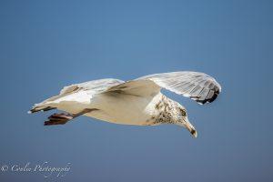 Conlin Photography Wildlife 16
